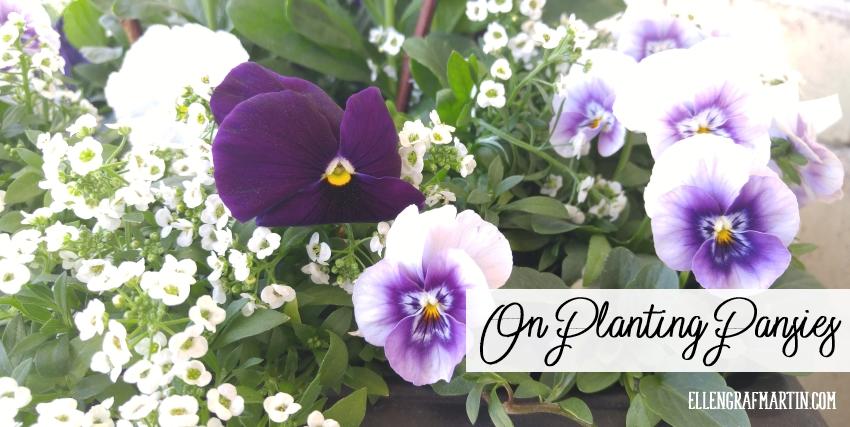 On Planting Pansies